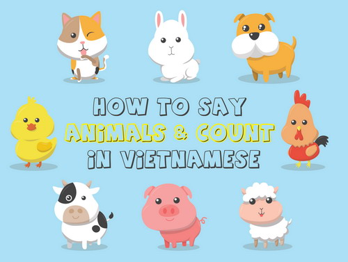 Video: Learn how to count and say animals in Vietnamese