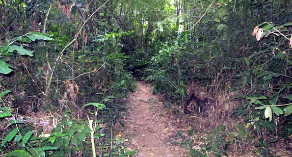 Ben Dinh - Cu Chi Tunnel Excursion | Half day