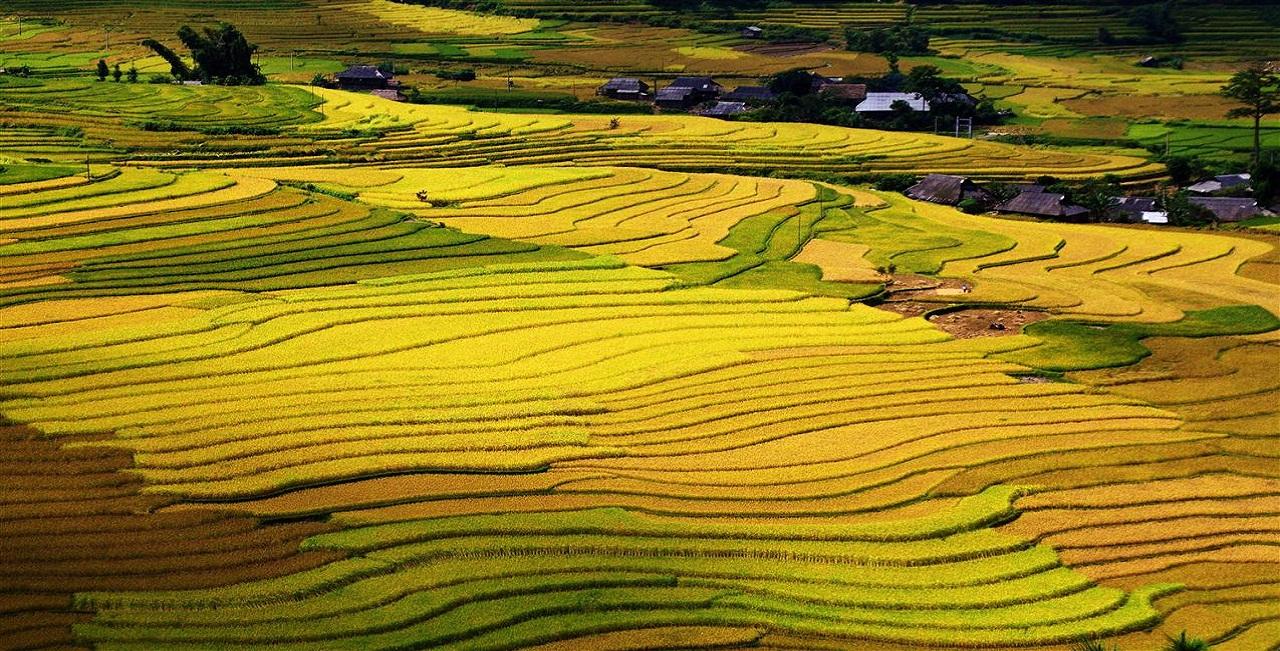 The rice terrace fields